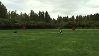 German Shepherd Dog Training In Ipo/schutzhund At Kincade Park, Ak