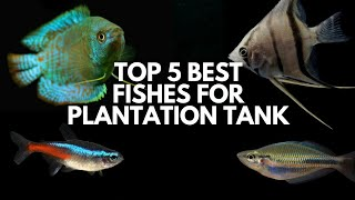 I Like these Fishes the most in Planted Aquarium...