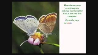 Урок бабочки или путь к успеху
