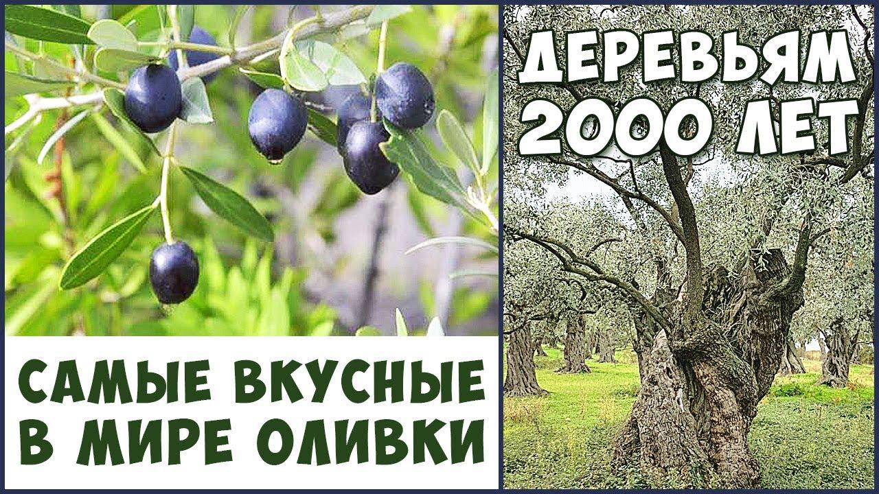фото уникальные деревья