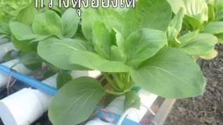 Repeat youtube video การปลูกผักไฮโดรโปรนิกส์แบบง่าย ๆ