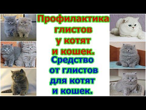 Токсифорт от паразитов и глистов: отзывы, цена, где купить