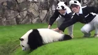 Панда развлекается) Смешное видео | Panda. Fun video