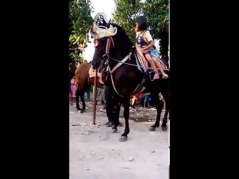 Kuda renggong Tolengas