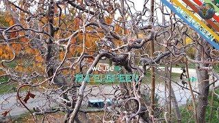 Supergreen nel giardino incantato di Luca Pappagallo con Il Bocca (alberi del Monte Amiata)