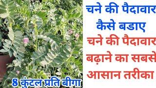 चने की पैदावार कैसे बडाए / चने की पैदावार बढ़ाने का सबसे आसान तरीका / chane ki paidavar Kaise bdaye