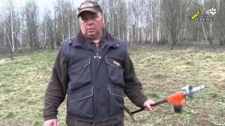 Приучение к выстрелу охотничьих собак