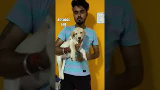 Customer feedback Dog for sale ( Customer live in Mumbai ) deliver by Rohit Dog kennel
