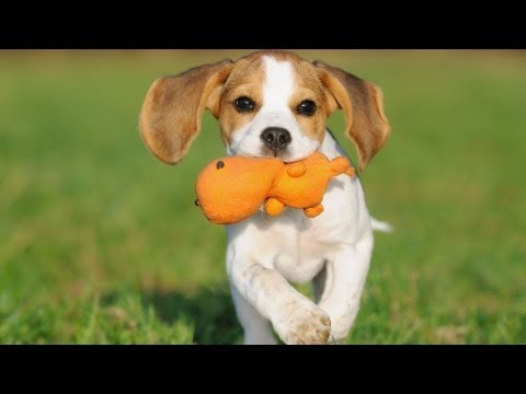 How to Pick the Right Toys | Puppy Care