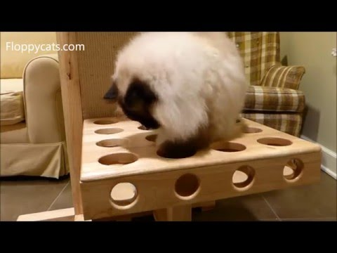 Ragdoll Cats Charlie and Trigg Check Out Mouse Balls by Petsport - = ネコ - ねこ- Floppycats