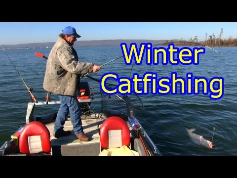 Catching Some Winter Time Blue Catfish