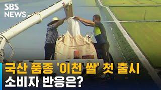 쌀 품종 독립 '이천 쌀' 올해 첫 출시…