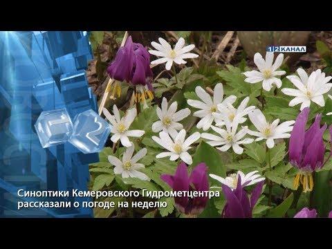 Синоптики Кемеровского Гидрометцентра рассказали о погоде на неделю