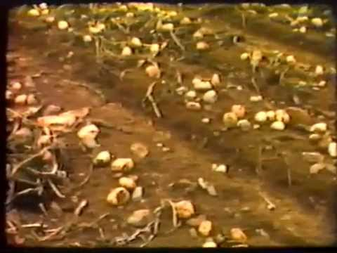 Farming in Newfoundland and Labrador 1987