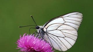 Lagu Kupu kupu Yang Lucu Lagu Anak