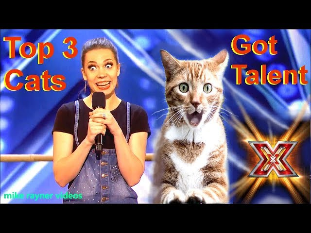 Savitsky Cats Got Talent Auditions! Amazing Cat Talent! Best