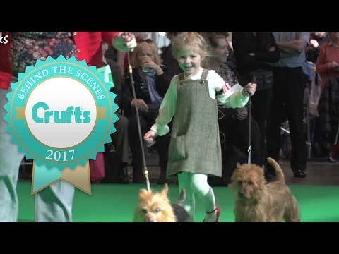 Youngest Ever Handler at Crufts 2017