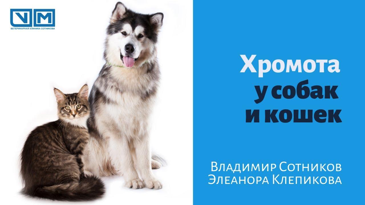 Хромота у собак и кошек - YouTube