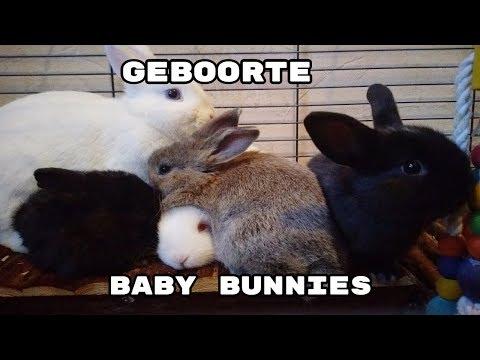 Timelapse baby konijntjes – Geboorte tot week 8