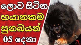 ලොව සිටින භයානකම සුනඛයන් 5 දෙනා WORLDS MOST DANGEROUS DOG BREEDS SINHALEN | LIFE කතා
