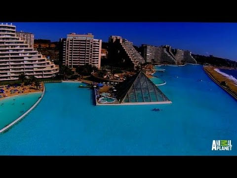 The Biggest Pool on Earth | The Pool Master