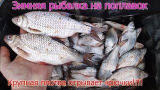 Зимняя рыбалка на поплавок КОНКУРС Ловля ОГРОМНОЙ плотвы на удочку на перловку и опарыш