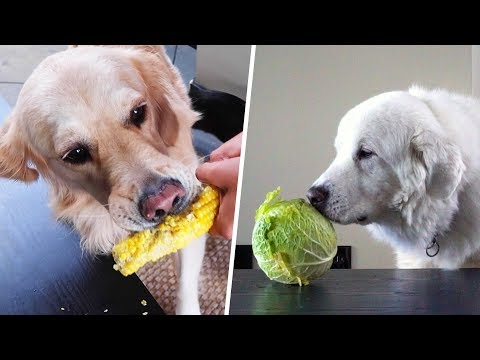 DOGS TRY VEGETABLES FOR THE FIRST TIME - SCS #194