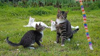 펜션의 행복한 고양이들