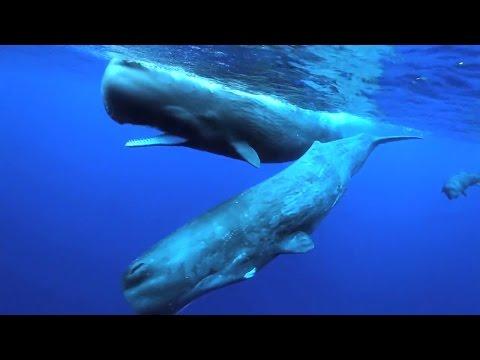 Mégafaune marine dans l'Océan Indien