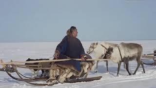 На Ямале выходит в прокат документальный фильм «Великий северный путь»