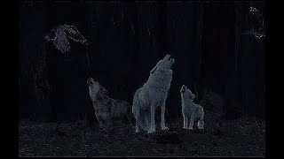 Sound of Crows - Ravens - Wolves Howling  - Night forest Sounds - 12 Hours - for Sleep & Relaxation
