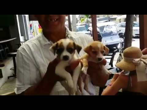 Puppies for sale ($2000 pesos) – Travel Vlog #16