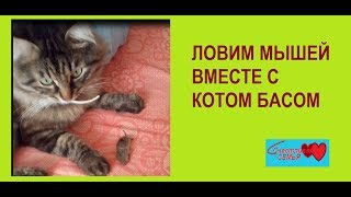 ЛОВИМ МЫШЕЙ ВМЕСТЕ С КОТОМ #домашниепитомцы / Видео