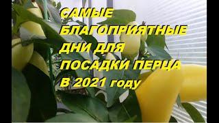 КОГДА СЕЯТЬ ПЕРЕЦ  В 2021 ГОДУ? Не спешить сеять! Посев по лунному календарю!