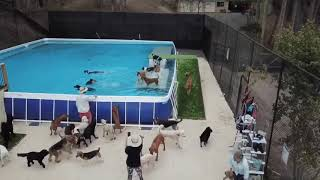 Dogs swimming in massive dock diving pool