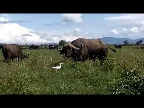 My First Ever Video!!!Beautiful Kenya:Wildlife and Nature....