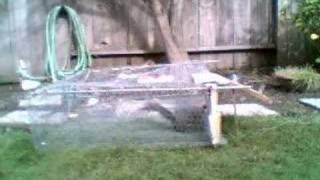 Homemade Automatic Squirrel Trap By Rad Rysker Dude
