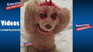 SCARE BEAR COMPILATION 2017 - Best Funny Videos