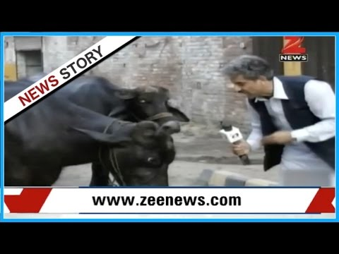DNA : Funny Pakistani media and its amusing news reporting