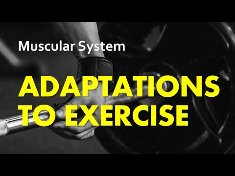 Anatomy & Physiology | Muscular System 08 - Adaptations To Exercise
