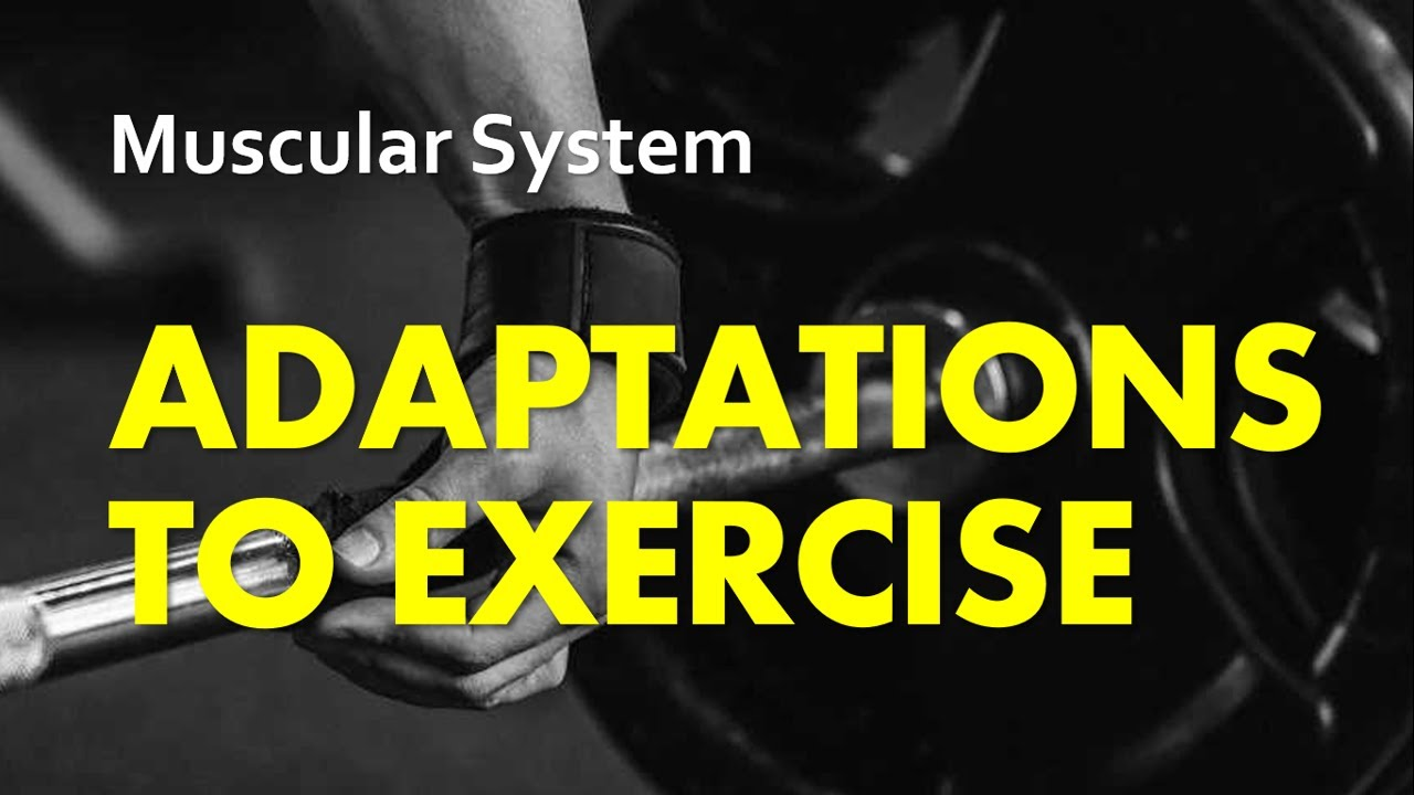 Anatomy & Physiology | Adaptations to Exercise: The Muscular System ...