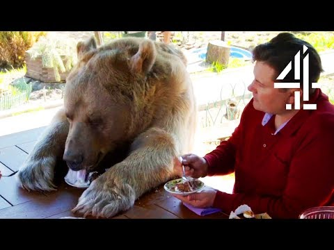 Breakfast With Your Pet Bear | Bear About The House: Me & My Supersized Pet