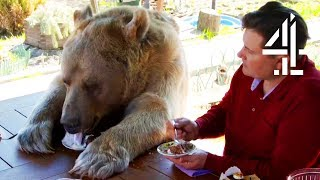 Breakfast With Your Pet Bear | Bear About The House: Me \u0026 My Supersized Pet