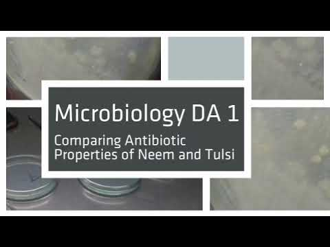 Comparison of antibiotic properties of neem and tulsi on river water sample
