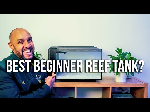This May Be The Best Cheap Beginner Reef Tank #SuperSimpleBudgetReef Ep1