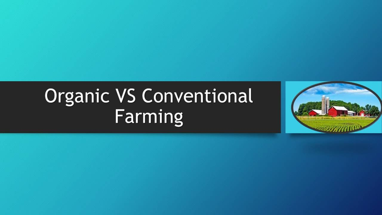 organic vs conventional farming Farmers often experience a decline in their yield when transitioning to an organic farming system studies show that a decline in yield is typical during the first 3-5 years of transition, but then crops rebound to produce 90-95 percent of conventional produce yields.