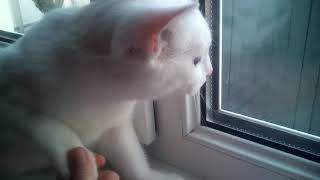 Милка! Я показываю где она ест,где спит и где ходит в туалет! Смешная кошка в моём видео!😸😸😺