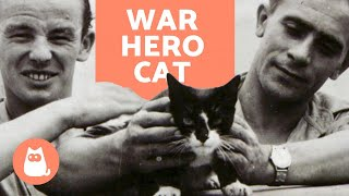 The Moving Story of SIMON the WAR HERO CAT 🐱⚓