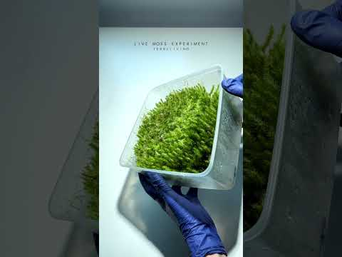 A box of live moss by TerraLiving