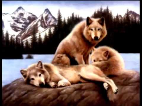 Os Lobos Mais Bonitos Do Mundo Youtube